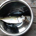2011.11釣り(志度にて)