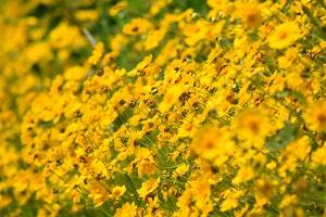 [blog]花
